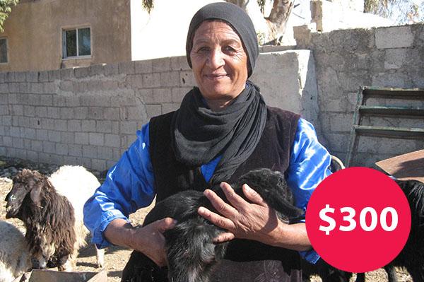 $300: Buy a Herd of Goats